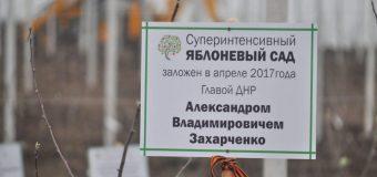 Глава ДНР Александр Захарченко принял участие в закладке первого в Республике яблоневого сада