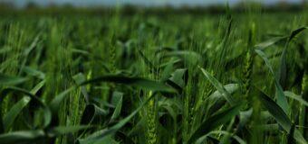Установлен минимально допустимый уровень цен на зерно